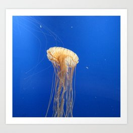 Jellyfish 1 Art Print