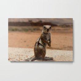 Squirrels of Society6 Metal Print