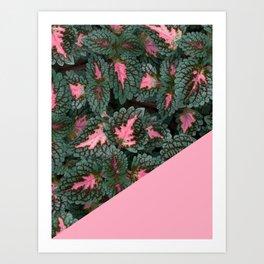 Pink on Coleus Plant Art Print
