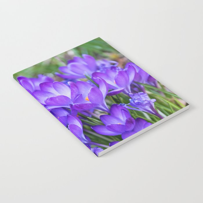 Violet Crocuses Notebook