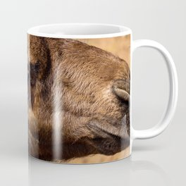 Approach of a camel baby. Dromedary of the desert. Coffee Mug