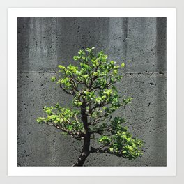 Bonsai Portrait Art Print