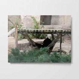 Lazy Bear in Hammock Metal Print