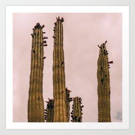 Cactus_0015 Art Print