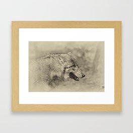 lonesome wolf Framed Art Print