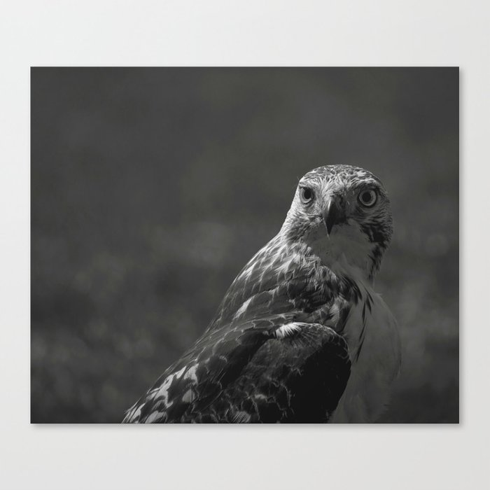 Birds eye view society6 art prints black and white animal photography