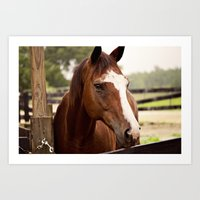 coco Art Prints featuring Coco by Images by Nicole Simmons