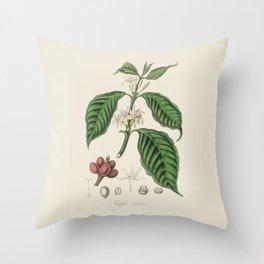 Coffee Bean Antique Botanical Illustration Throw Pillow