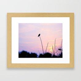 Humming Bird Silhouette  Framed Art Print