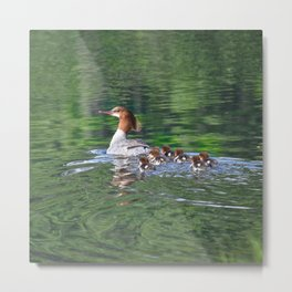 Merganser Duck Family Metal Print