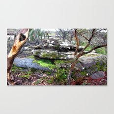 Moss & Volcanic Rocks Canvas Print