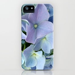 Inflorescences of hydrangea macrophylla. Blue floral hortensia background iPhone Case