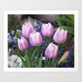 Spring gathering of pink tulips Art Print