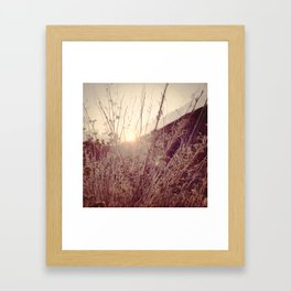 In a Different Light Framed Art Print