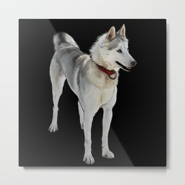 Quincy Sled Dog (black) Metal Print