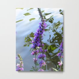Lakeside View Metal Print