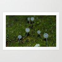 Angel Fungi Art Print