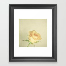 A Single Rose Framed Art Print