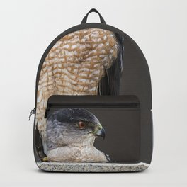 Red eyed Coopers Hawk Backpack