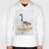 canada Hoodies featuring Bernache du Canada (Canada Goose) by Condor