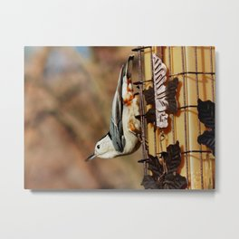 Hanging nuthatch Metal Print