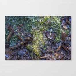 fairy tales moss Canvas Print