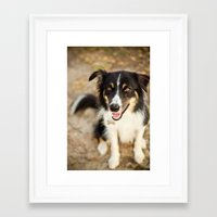 border collie Framed Art Prints featuring Border Collie by Paw Prints By Jamie