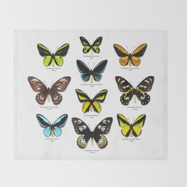 Butterfly012_Ornithoptera Set1 on White Background Throw Blanket