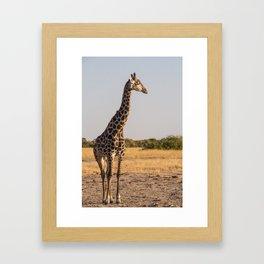 Giraffe II Framed Art Print