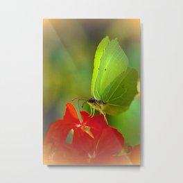 Brimstone Butterfly 45 Metal Print