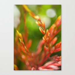 New beginning Canvas Print