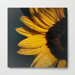 Sunflower With Dark Background And Raindrops Metal Print