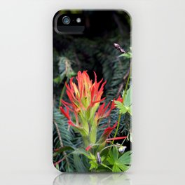 Paintbrush in Spruce iPhone Case