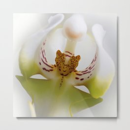 Phalaneopsis Metal Print