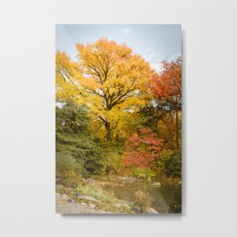 Autumn in All Its Glory Metal Print