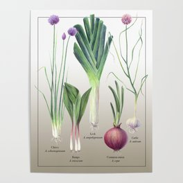 Edible Alliums Poster