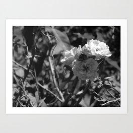 Depth of Field - Natural Growth Art Print