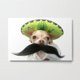 Mexican Chihuahua Metal Print