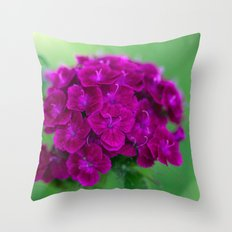 Dianthus barbatus flowers 3525 Throw Pillow