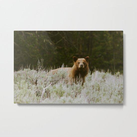 Bush Bear Metal Print