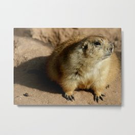 Phoenix Zoo Photo Metal Print