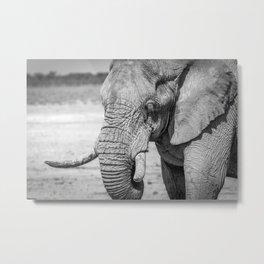 B&W Elephant 10 Metal Print