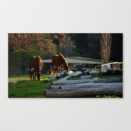 Golden Brushed Horses Canvas Print