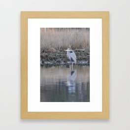 Great Blue Heron of the Elizabeth River Framed Art Print