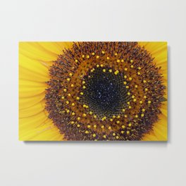 Close Up of a Sunflower Metal Print