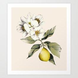 Jasmin & Bergamot Art Print