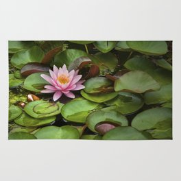 Pink Blossom on Lily Pads in a Michigan Pond Rug