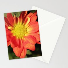 Pretty holiday orange daisy flower. Floral nature garden photography. Stationery Cards