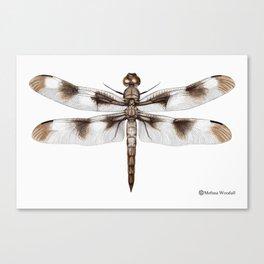 Twelve-Spotted Skimmer Dragonfly Canvas Print