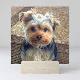 Always Thinking of You... | Yorkie | Dogs | Nadia Bonello Mini Art Print